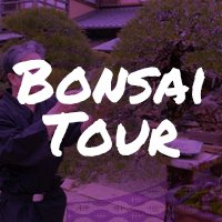 Rugby-World-Cup-Tour-Package-bonsai