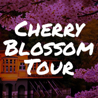 Rugby-World-Cup-Tour-Package-cherry-blossom